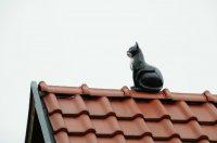 Kot na dachu